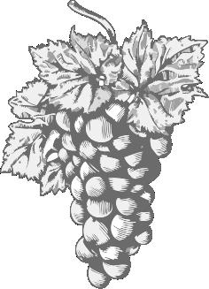 Raisins Exporter
